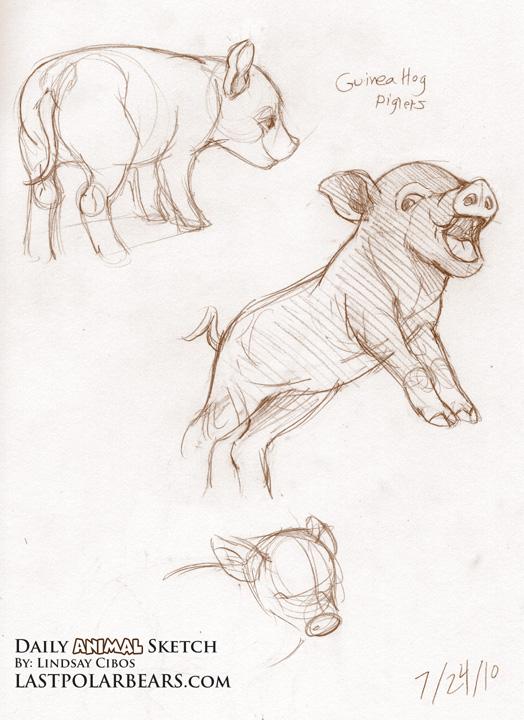 Guinea Hog piglets