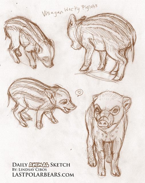 Visayan Warty Piglets