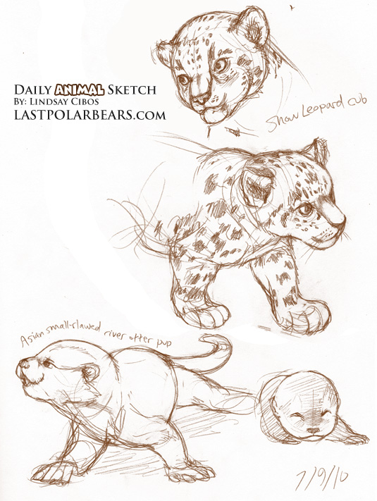 Daily Animal Sketch Snow Leopard And River Otter Last Of The