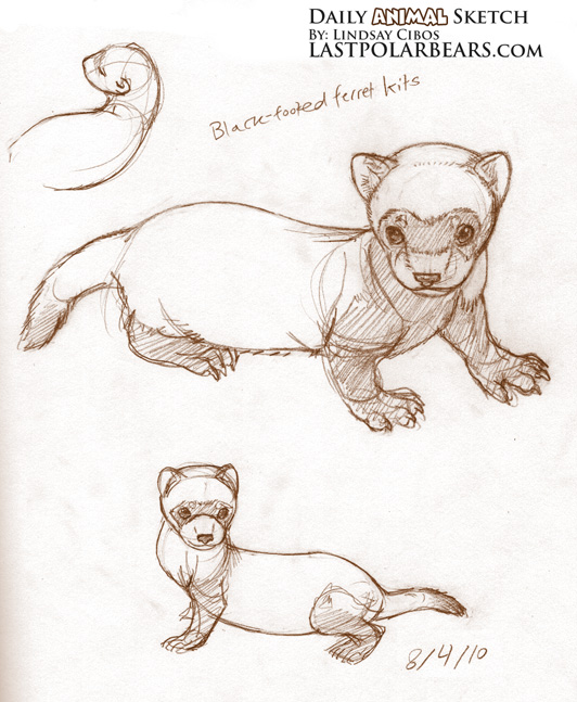 Daily Animal Sketch – Black-footed Ferrets – Last of the Polar Bears
