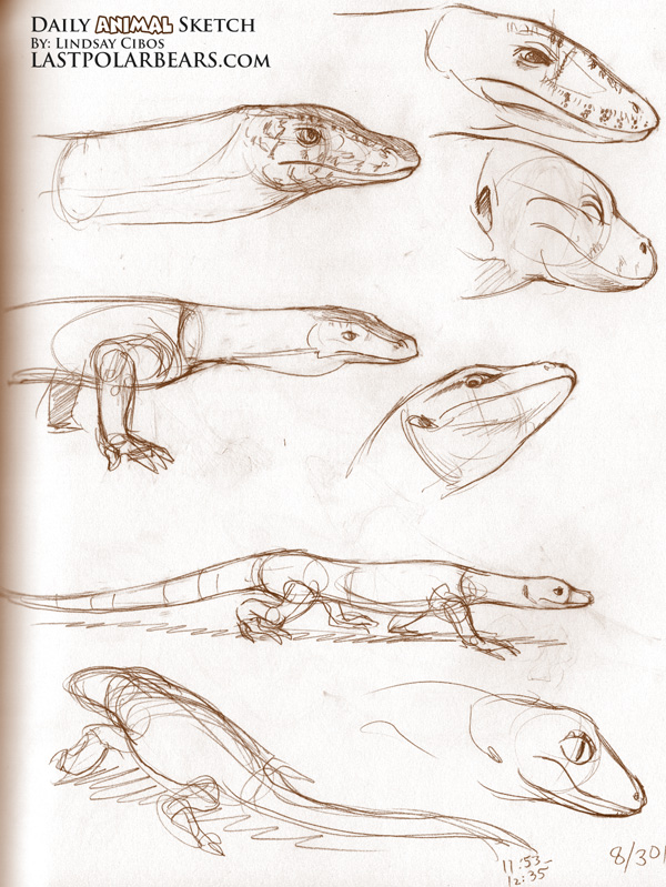 More Lizards