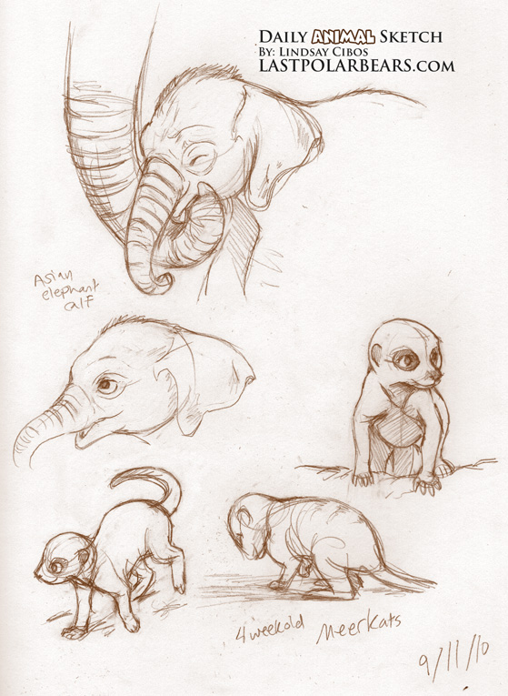 Asian Elephant and Meerkats
