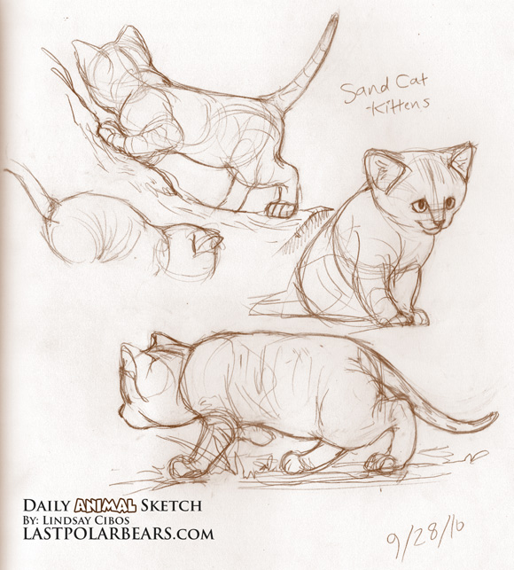 Sketch Cute Cat Sketch – Sand Cat Kittens