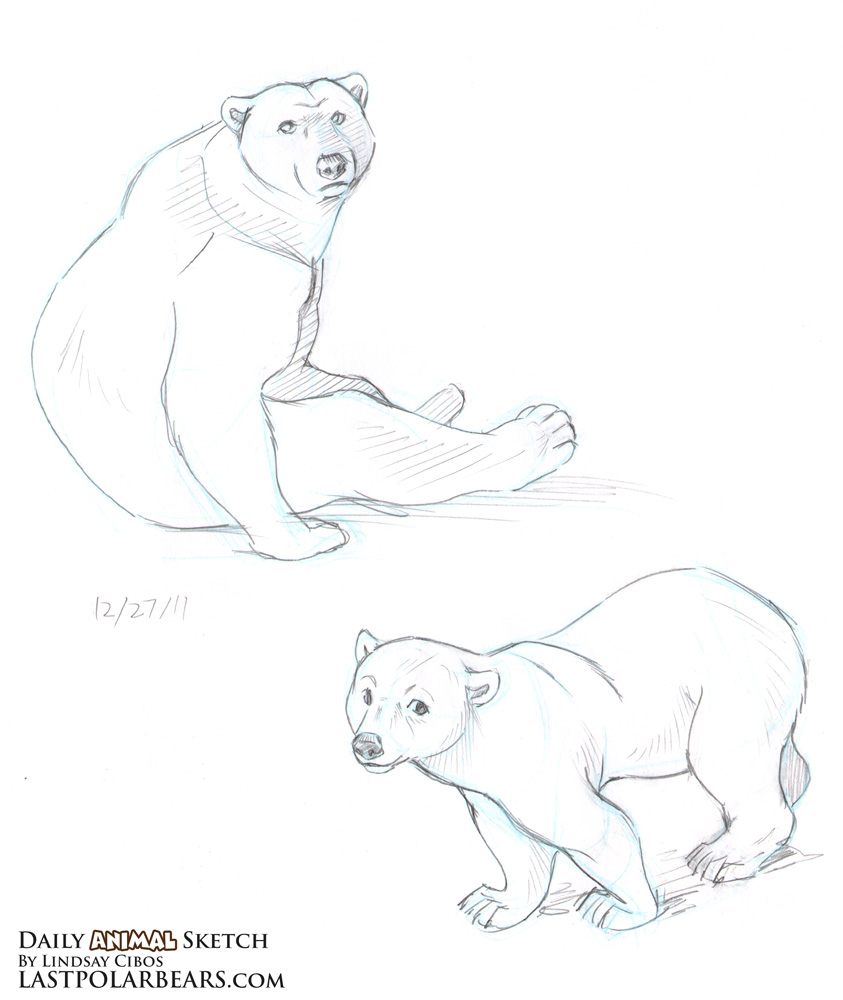 how to draw a bear sitting