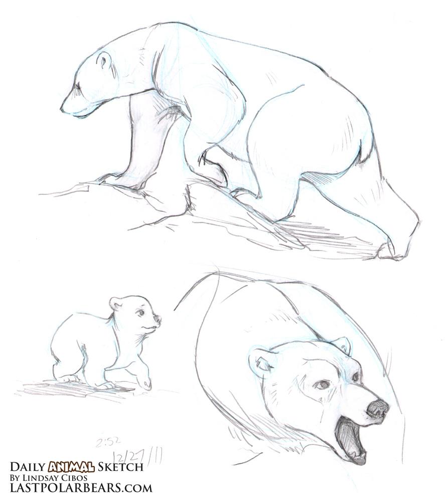 Cute polar bear drawings - photo#18