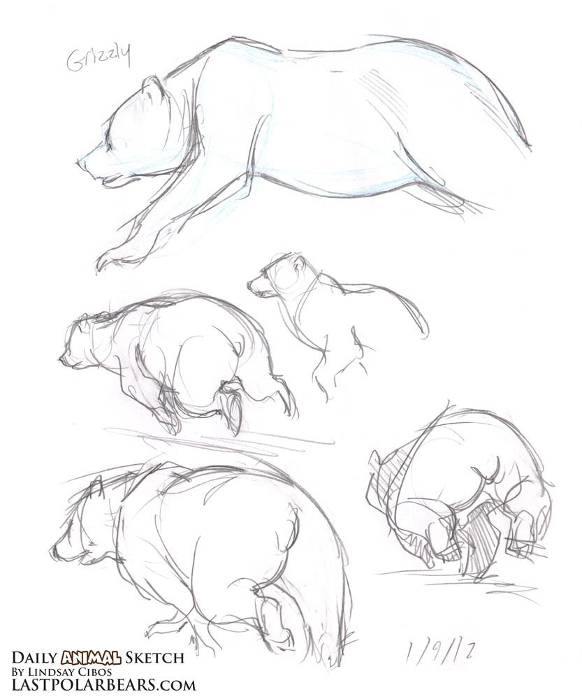 daily animal sketch u2013 grizzly and polar bears u2013 last of the polar