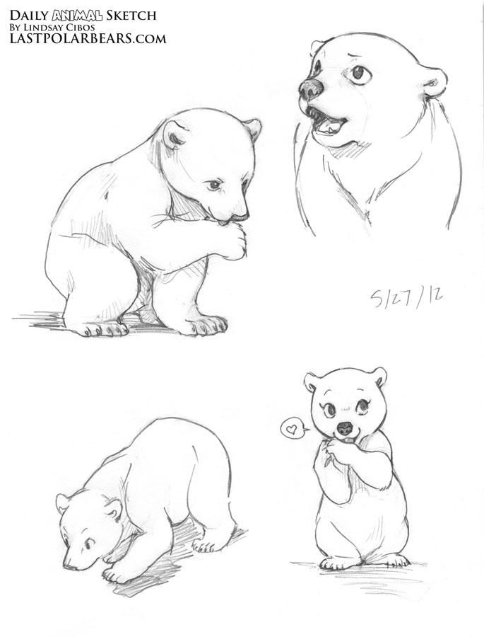 Cute polar bear drawings - photo#8