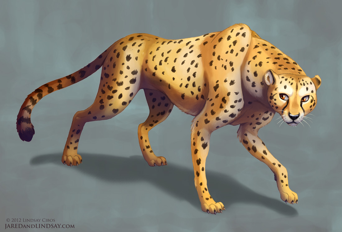 Uncategorized Draw Cheetah how to draw a cheetah last of the polar bears step