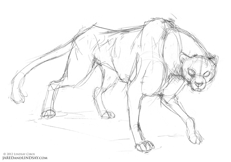How to Draw a Cheetah – Last of the Polar Bears