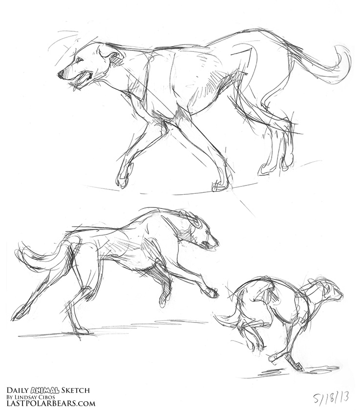 Daily_Animal_Sketch_155