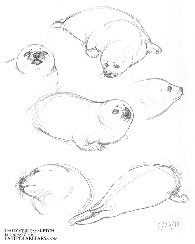 Daily_Animal_Sketch_161