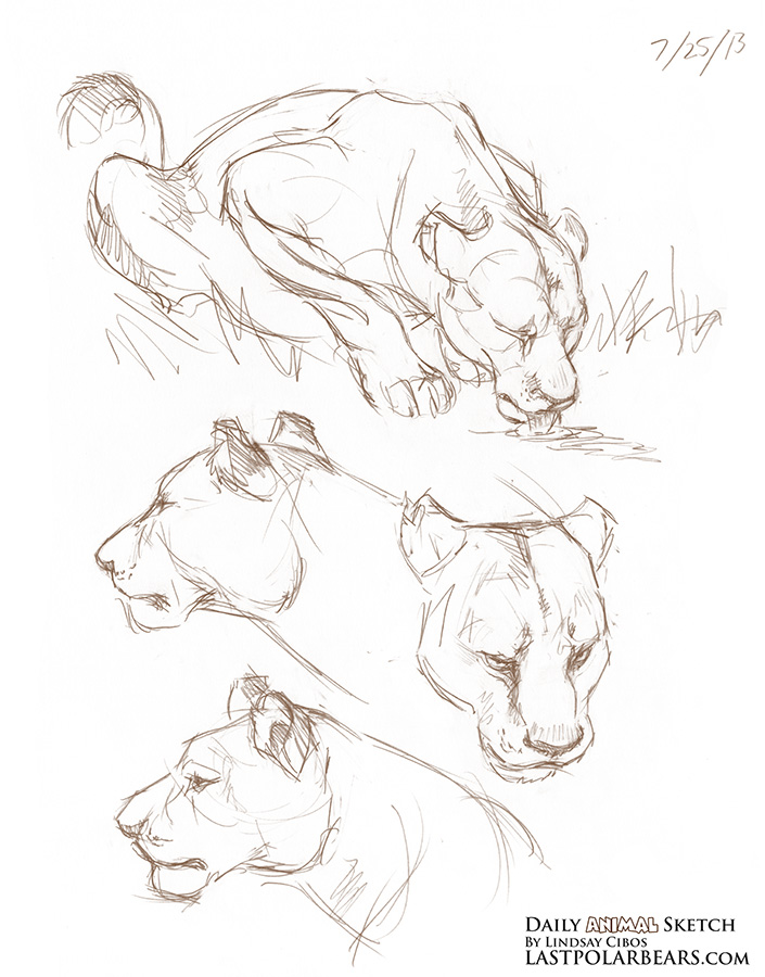 Daily_Animal_Sketch_167